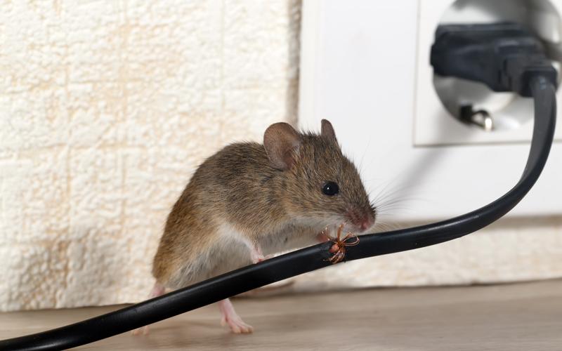 SOCIÉTÉ DÉRATISATION - Dératisation à Montreuil - Dératisation rats - Dératisation souris - Particuliers - Professionnels - 24H/24 - 7J/7 - 06 46 02 29 82